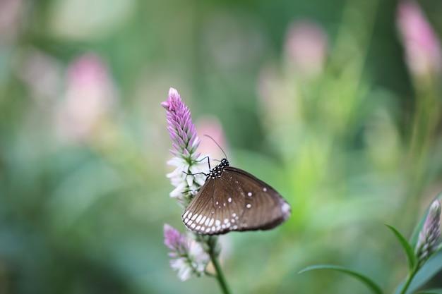 Бабочка летать в утренней природе