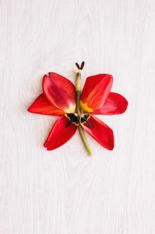 白地に赤いチューリップから蝶