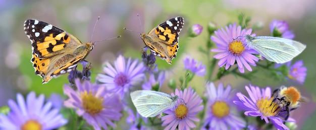 Бабочка собирает розовые цветы в саду с панорамным видом