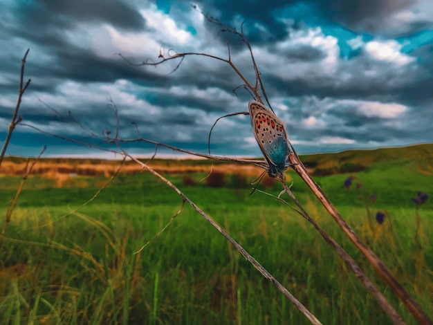 Butterfly on a grass with dramatic sky. macro butterfly in wildlife