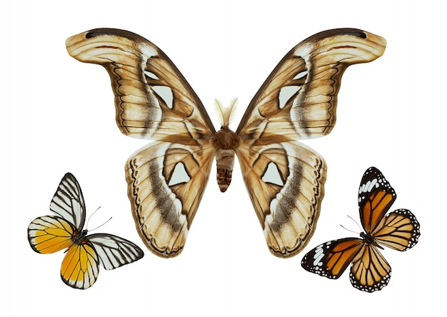 Butterfly group isolated
