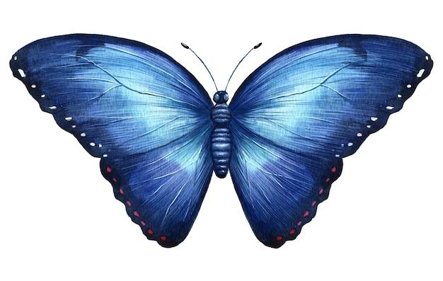 나비 손으로 그린 수채화 현실적인 그림 절연