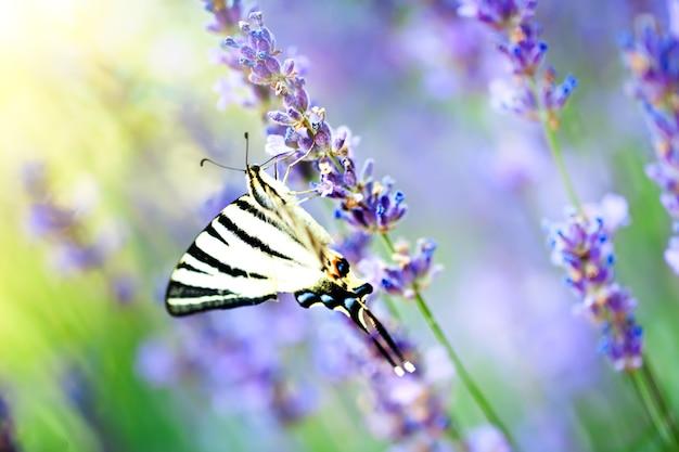 자연 서식지의 나비
