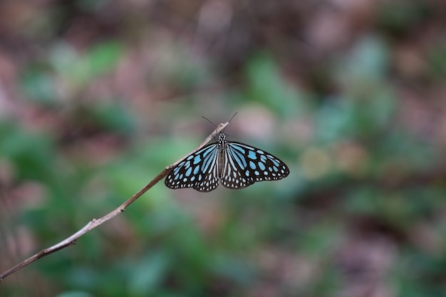 숲 속의 나비