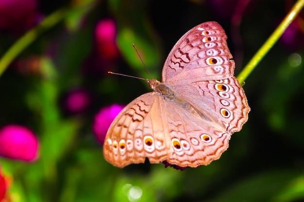 Бабочка в саду крупным планом