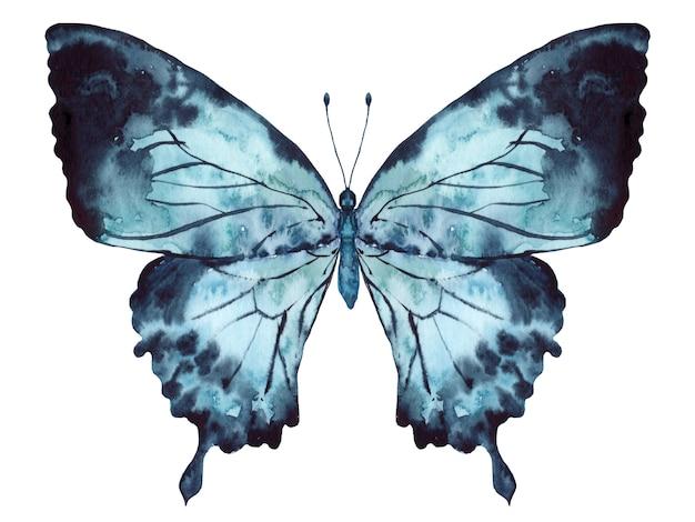 Бабочка индиго голубая акварель на белом фоне