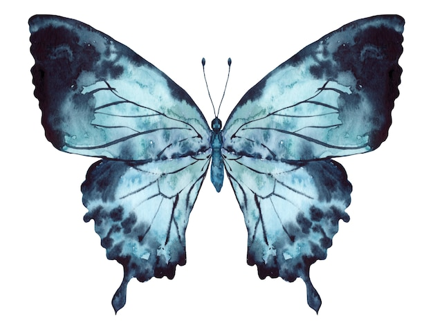 Butterfly indigo blue watercolor isolated on white background