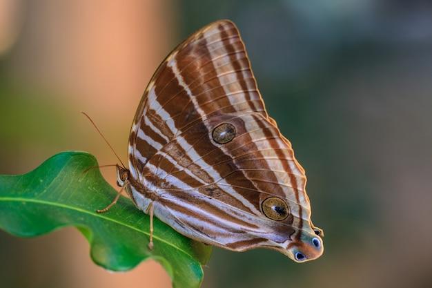 蝶、昆虫、マクロ昆虫