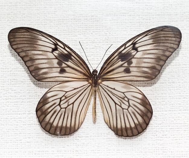 흰색 표면에 고립 된 나비