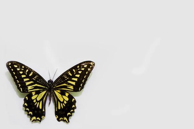 Бабочка, изолированные на белом фоне