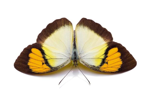 分離された蝶