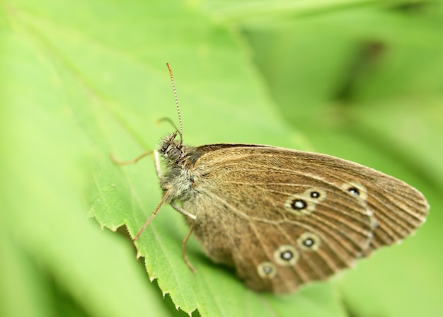 Butterfly on a leaf,