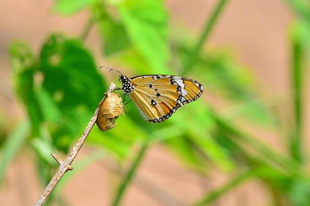 Жизнь бабочки в естественных