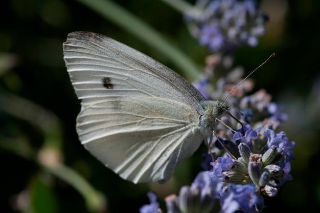 Бабочка на кустарнике