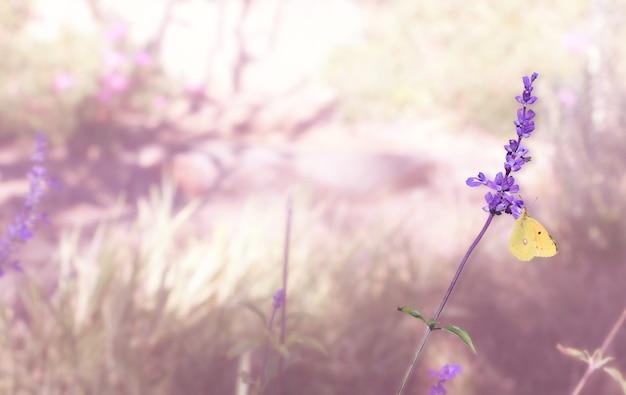 Бабочка на цветке лаванды в цветущем саду