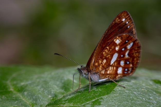 Бабочка на листе кормления 0