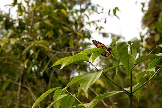 葉の上の蝶