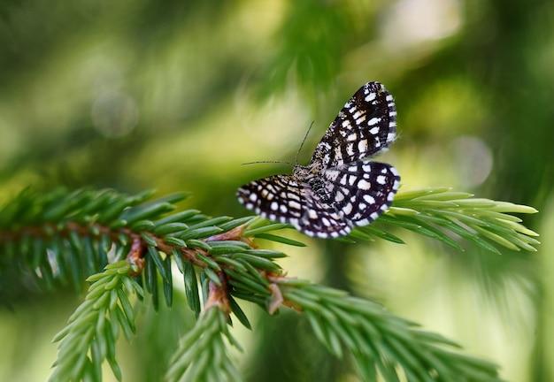 식물에 나비