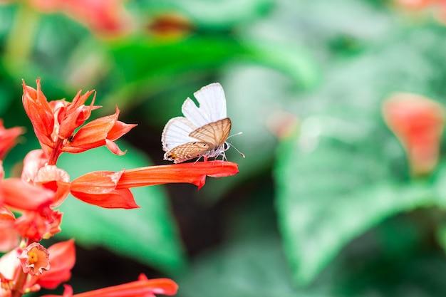 赤い花を蝶します。