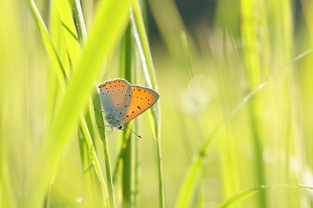 日差しの中で春の牧草地に蝶