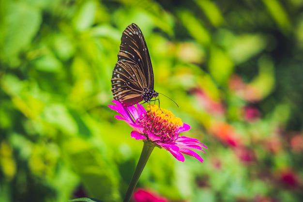 Бабочка на тропическом цветке в парке бабочек