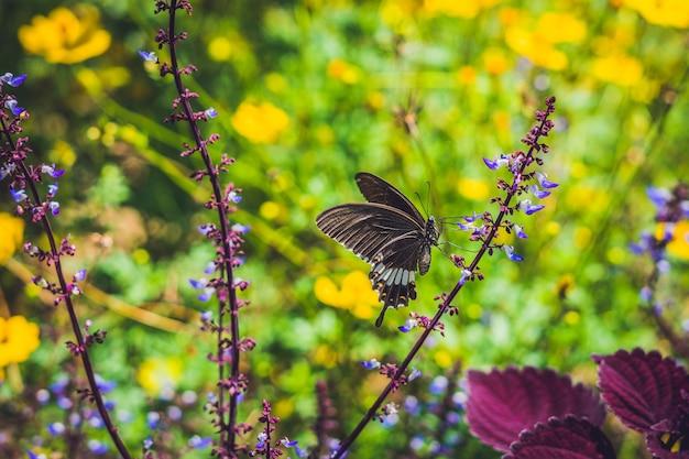 Бабочка на тропическом цветке в парке бабочек.