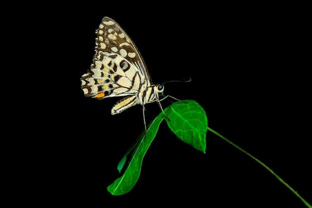 검은 배경에 나비