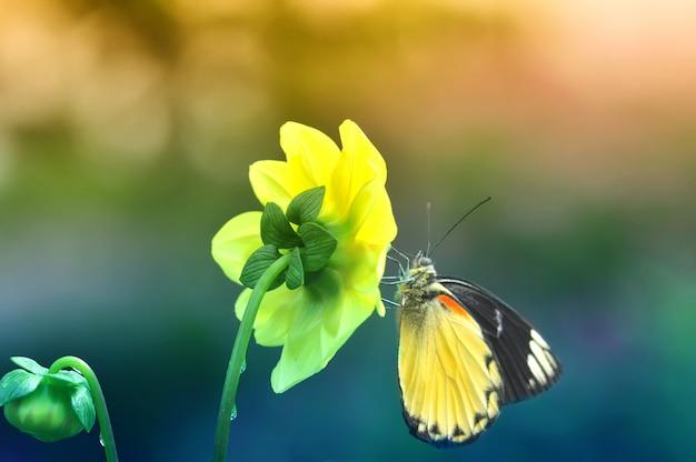 Бабочка на цветке летом