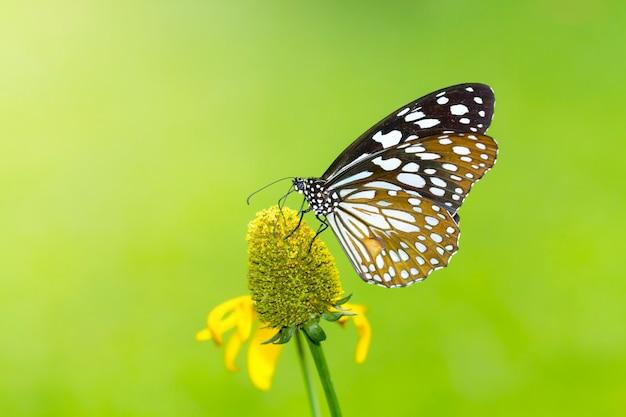 Бабочка на цветке в саду