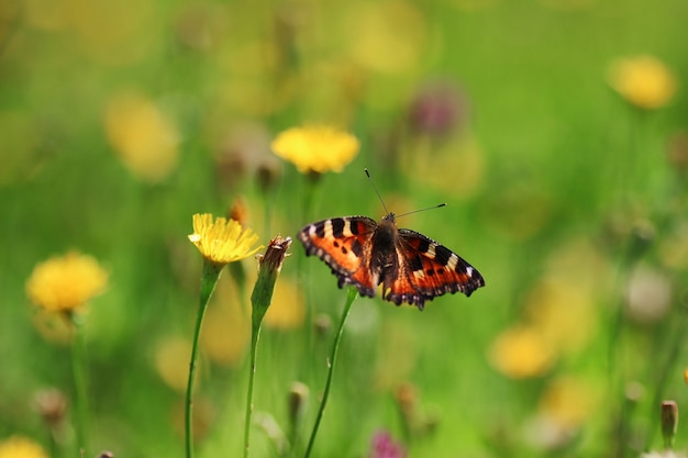 Бабочка на траве