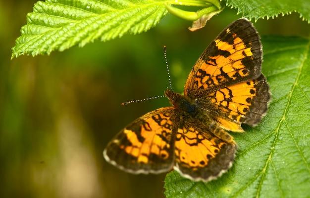 リーフの蝶