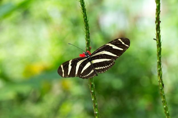 Бабочка в отпуске, крупным планом