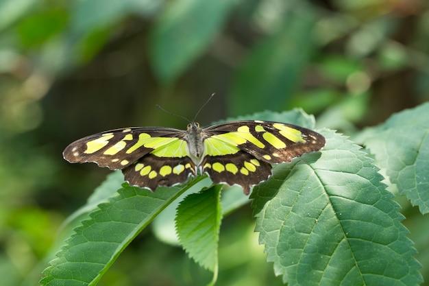 Бабочка в отпуске, природа фон
