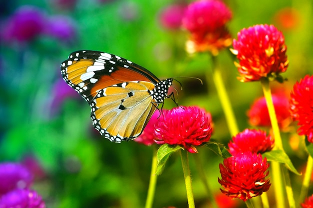 Бабочка на красном цветке крупным планом