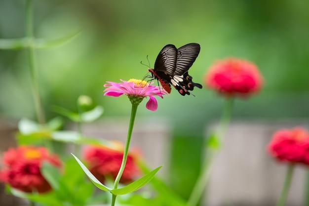 Бабочка на красном цветке в саду