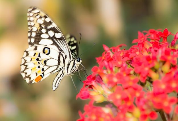 赤い花に蝶。