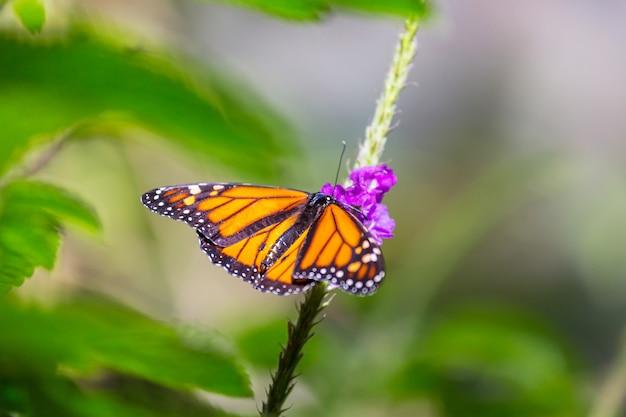 Бабочка на весенних цветах