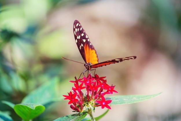 春の花の蝶