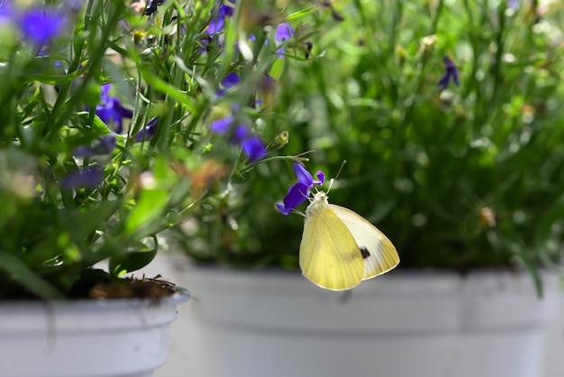 푸른 꽃에 나비