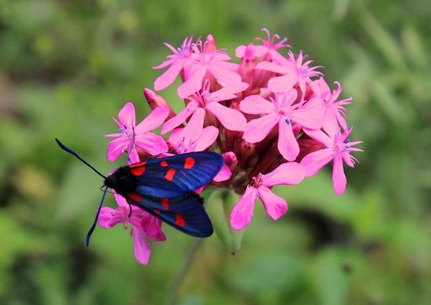 Бабочка на цветке и растении, природа и дикая природа, жизнь насекомых, зеленая поверхность.