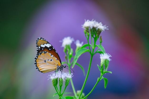 花の植物を蝶します。
