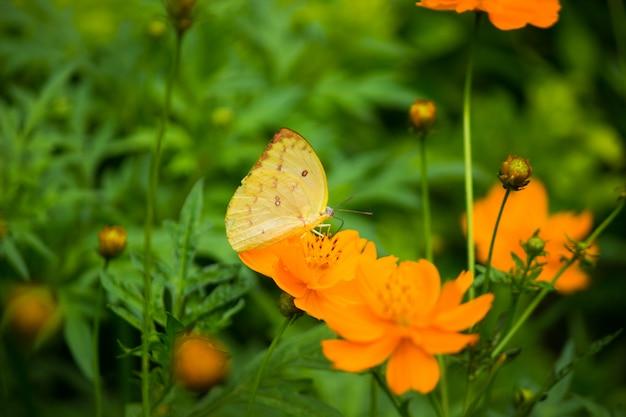 花の植物の蝶 Premium写真