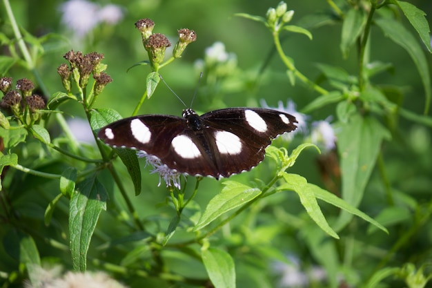 花の植物の蝶