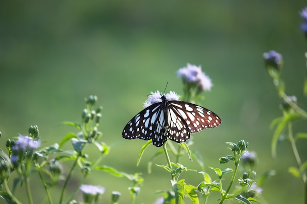 花を蝶します。