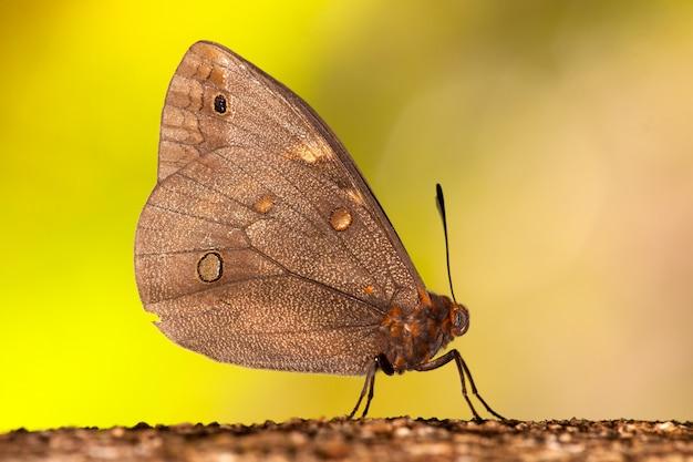 Бабочка на стволе дерева