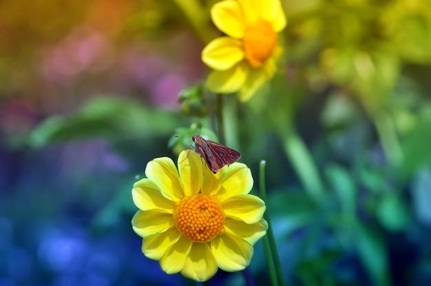 Бабочка на желтом цветке крупным планом