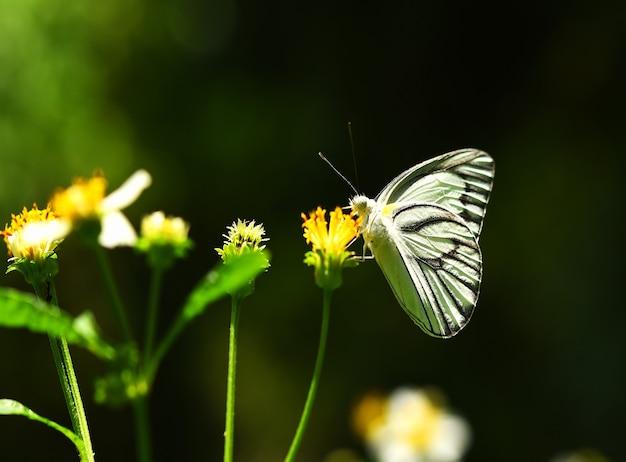 정원에서 노란 꽃에 나비
