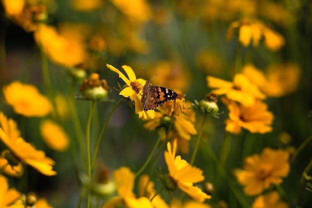 노란 꽃 여름에 나비