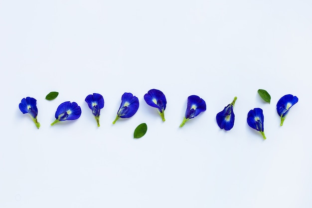 Butterfly pea flower on white.