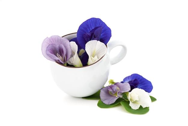 白い背景で隔離の蝶エンドウ豆の花。